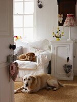 Two dogs in comfortable home office with white sofa; candlestick and table lamp on cabinet