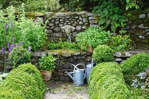 Zinc watering cans and topiary box hedges in front of stone-walled fountain with stone sheep's head as water spout