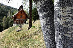 Small wooden cabin in woods, Val Sinestra, Graubuenden canton, Switzerland