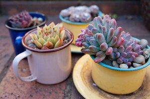 Succulents planted in various enamel mugs