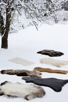 Various animal skins in snow