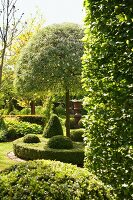 Summer atmosphere in landscaped garden with topiary box hedges and trees