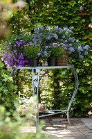 Arrangement of purple flowering garden plants on romantic garden table in front of green hedge