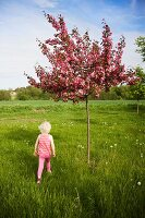 Blonde little girl below blossoming tree in summer meadow