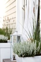 White heather and ornamental grasses in planters flanking terrace door of wooden house