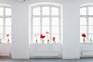 Potted amaryllis on window sills on loft-style interior