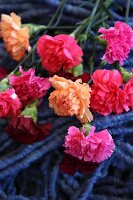 Pinks on pile of blue felt cords