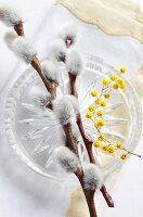 Table decoration of willow catkins and mimosa flowers on glass plate