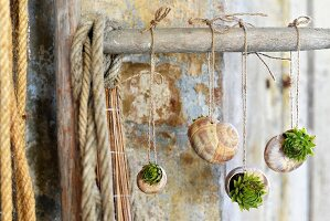Tiny succulents planted in snail shells hung from rod