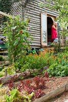 Beds of vegetables and flowers in garden; woman standing in open door of wooden house in background