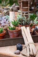 Mixture of potted succulents and tied bundle of sticks on surface