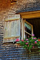 Flowers in window box of old farmhouse (Bregenzerwald, Vorarlberg, Austria)