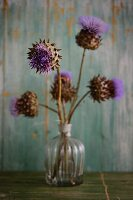 Thistle flowers in a glass vase