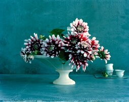 Bicolour dahlia flowers in white dish