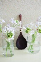 White hyacinths growing in glasses of water