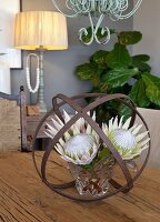 Protea flowers in crystal vase inside sphere of iron strips