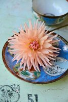 Salmon pink dahlia on blue china plate