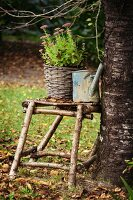 Plant in wicker pot and old watering can on stool hand-crafted from branches in garden