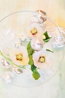 Top view of hellebore flowers in glass bowl