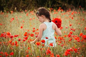 Girl picking poppies in wheat field