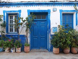 A typical blue-and-white house façade with pot plants in the old town of Asilah, Morocco