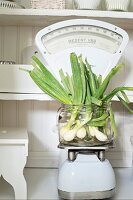 Spring onions in glass jar on old-fashioned kitchen scales