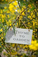 Sign hung on branch of yellow flowers in garden