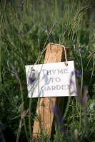 Sign hung on rustic wooden post amongst lavender flowers in garden
