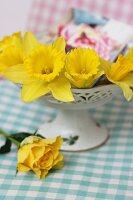 Narcissus flowers in ceramic bowl
