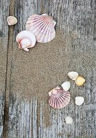Seashells and sand on rustic wooden surface