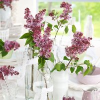 Purple lilac in various vases on set table