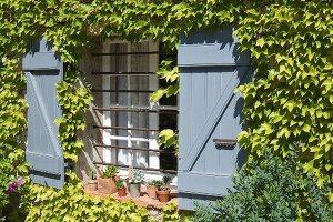 Weinberankte Fassade mit hellblauen Bretterläden an einem mit Querstangen vergitterten Fenster
