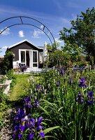 Flowering iris in garden with summer house in sunlight in background
