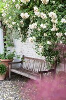 Wooden bench against whitewashed brick wall and white-flowering rose bush in garden