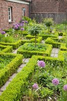 Knot garden with clipped hedges and flowering alliums