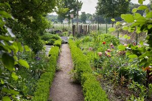Narrow path between beds edged by clipped hedges in garden
