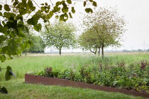 Raised bed with metal surround in open landscape