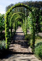 Garden path leading through climber-covered rose arches