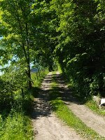 Idyllic path along edge of green woodland in summer