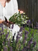 Woman holding flowering herbs in garden
