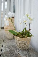 White orchid in papier mâché pot hand crafted from vintage book pages on rustic wooden surface
