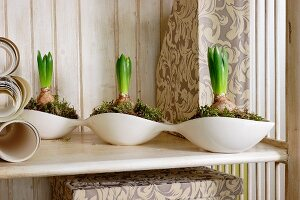 Hyacinths planted in connected, white china dishes on wooden surface
