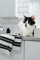 Cat sitting on towel on white bathroom cabinet in tiled, modern bathroom