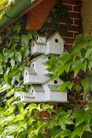 Vogelhäuschen Anlage weiss und grün lackiert an berankter Wand befestigt