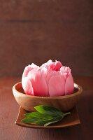 Rosa Pfingstrosenblüte in Holzschale