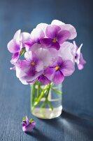 Purple violas in glass of water