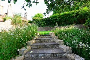 Old stone steps in garden flanked by wild flowers and tall grass