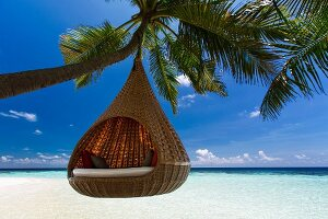Hanging pod chair suspended from palm tree on beach in the Maldives