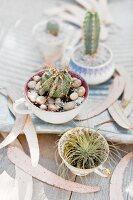 Kakteen in alte Tassen gepflanzt, mit Kies und Steinchen