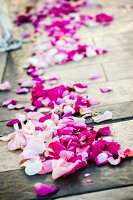 Rose petals in aisle at wedding